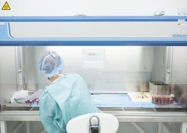 Zpracování placenty v laminárním boxu